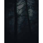 A boreal forest at night